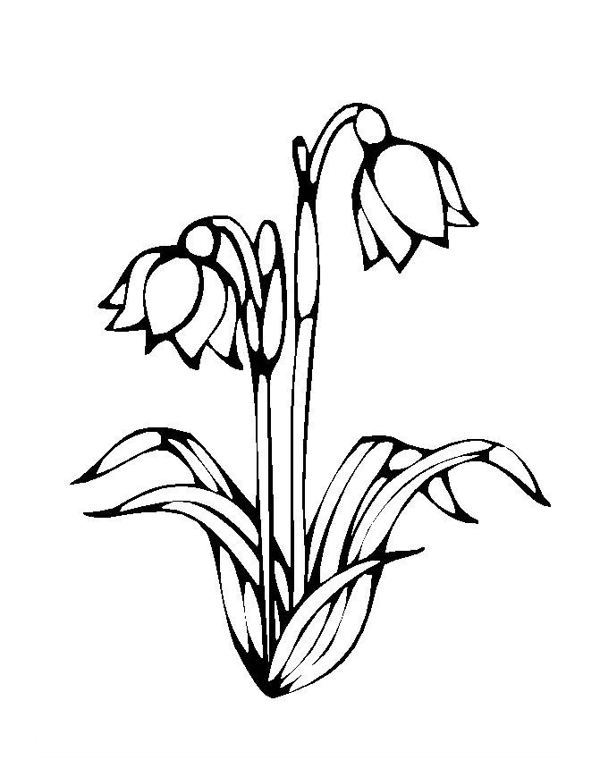 Flower Colouring Sheets 1
